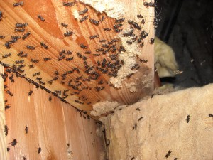 What To Do If Bed Bugs Are Found In House